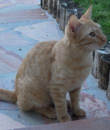 002_scarib_cat.jpg
