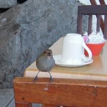 013_scarib_bird1.jpg